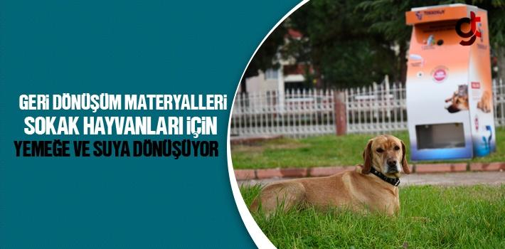 Tekkeköy'de Geri Dönüşüm Materyalleri Sokak Hayvanları İçin Yemeğe ve Suya Dönüşüyor!