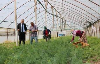 Çarşamba'da Tarım ve Orman Müdürü Akman'dan serada inceleme