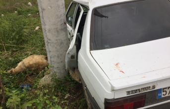 Samsun'da yola çıkan koyunlar kazaya neden oldu: 1 yaralı