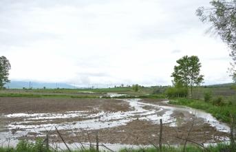 Havza'da yağış ekili tarım alanlarına zarar verdi
