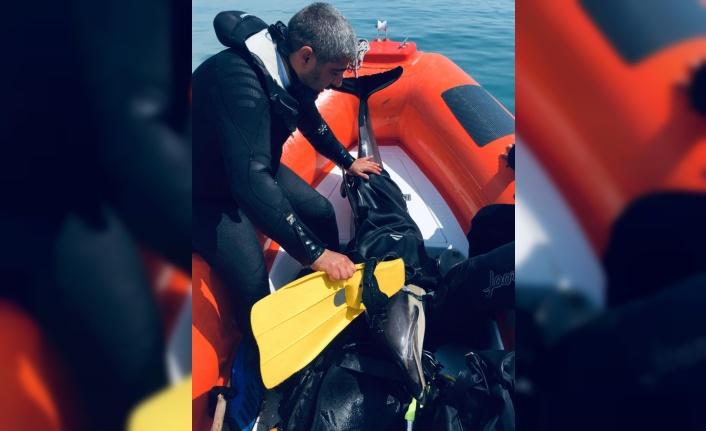 Samsun'da sığ sularda sıkışan yunus kurtarıldı