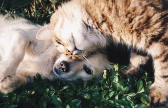 Sokak hayvanları için yeni yasa çıkacak