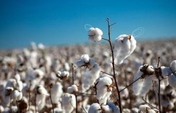 Dünyanın en büyük pamuk üreticileri hangi ülkeler?