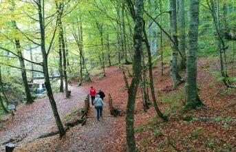 Vatandaşlar ormanlık alanları tercih ediyor