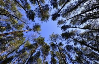 Hükümlülerin 'dikili ağacı' 1 milyonu aştı