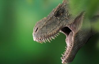 T-Rex'lerin kafataslarında klima işlevi gören...
