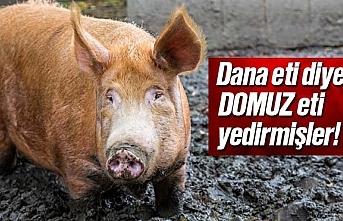 Dana eti diye Domuz eti yedirmişler