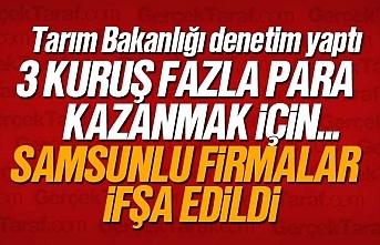 Tarım Bakanlığı tağşiş yapan Samsunlu firmaları...