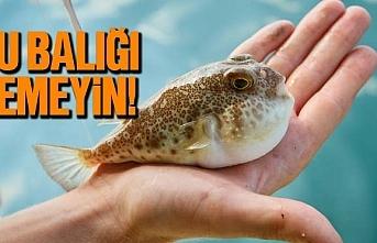 Balon balığı yenir mi? Balon balığı zehirli...