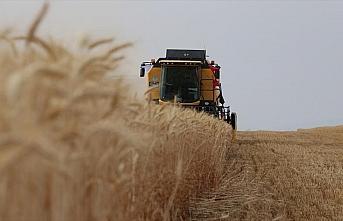 Buğday ticaretinden 17 yılda 12,5 milyar dolarlık...