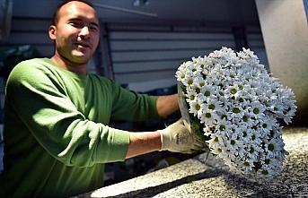 Çiçek mezatlarında '14 Şubat' yoğunluğu