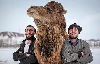 Çoban kardeşler kar üstünde şampiyon develer...