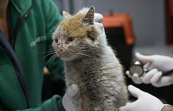 Enkaz altından çıkarılan kedi 'Toros'a belediyede...