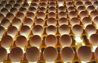 Irak'ın yumurta ithalatı yasağı Suriye ve Kuveyt'e...