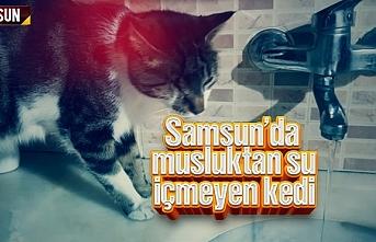 Samsun'da musluktan su içmeyen kedi