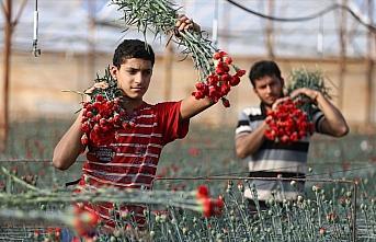 Türkiye'de en çok üretilen kesme çiçek 'karanfil'...