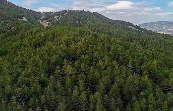 Orman zararlılarıyla mücadele için geçen yıl...