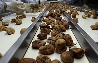 Türkiye'nin kuru meyve ihracatı 700 milyon doları aştı
