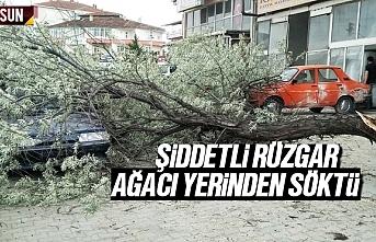 Samsun'da şiddetli rüzgar ağaçları yerinden...