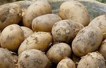 Tarım ve Orman Bakanlığından 50 bin ton patates...