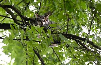 Ağaçta mahsur kalan kedi yavrusunu itfaiye kurtardı