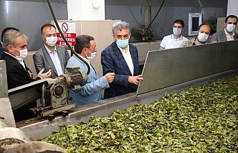 AK Parti Genel Başkan Yardımcısı Yazıcı çay...