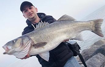 Amatör balıkçının oltasına 6 kilogramlık levrek...