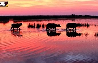 Dünya mirası Kızılırmak Deltası ziyaretçilerini...