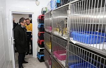 Eyüpsultan'da 89 kedi ve köpek sahiplendirildi