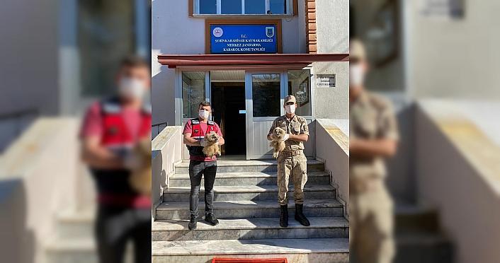 Giresun'da puhu yavrularını satmak isteyen kişilere 26 bin lira ceza