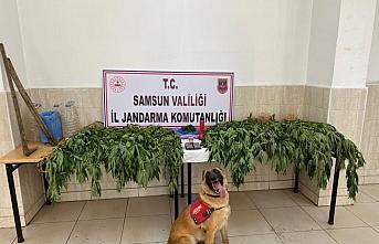 Samsun'da uyuşturucu operasyonlarında yakalanan...
