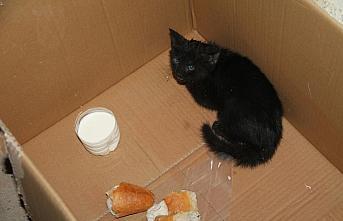 İki apartman arasındaki boşluğa düşen kedi yavrusunu itfaiye kurtardı