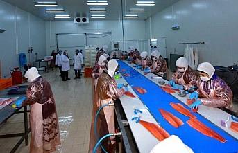 Karadeniz'de üretilen somon talep görüyor