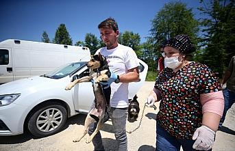Köpeği yaralanan yaşlı kadının yardımına Vefa...