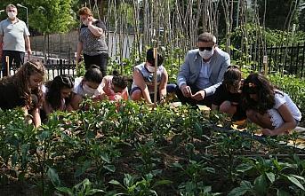 Öğretmen ve öğrencileri okul bahçesinde sebze üretiyor