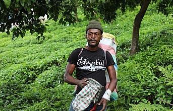 Rizeli üretici yaş çay hasadını Senegalli arkadaşlarıyla...