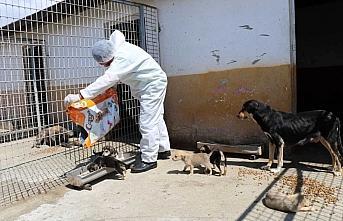 Safranbolu'da sokak hayvanları unutulmadı