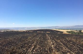 Suluova'da buğday tarlasını kundakladığı iddia...
