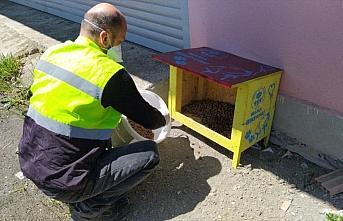 Trabzon Büyükşehir Belediyesinin sokak hayvanlarına destekleri sürüyor