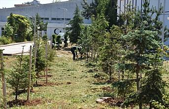 Trabzon Üniversitesi kampüsündeki 12 bin fidanın...