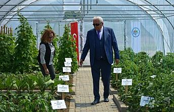 Zonguldak'ta 12 çeşit ata tohumu üretilecek