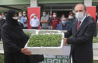 Bayburt'ta kadın çiftçilere 150 bin tarhun fidesi...
