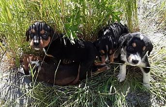 Bolu'da başıboş köpek ve 7 yavrusuna ilçe sakinleri...