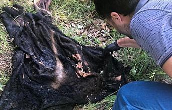 Çaldığı büyükbaş hayvanın etini kasap dükkanında satmaya çalışan zanlı yakalandı