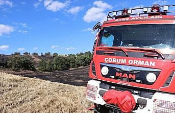 Çorum'da çıkan anız yangınında 20 hektarlık...
