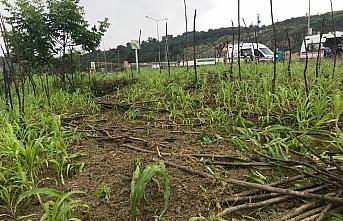 Ordu'da otomobil mısır tarlasına devrildi: 2 yaralı