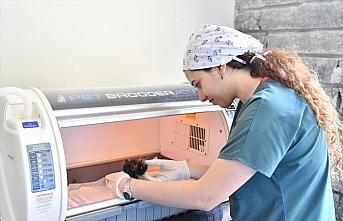 Samsun'da 6 ayda 360 sokak hayvanı tedavi edildi