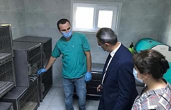 Sinop'ta alaca baykuş 4 ay sonra doğaya salındı