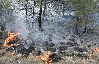 Sinop'ta iki ilçede orman yangını çıktı