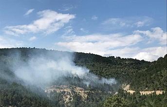 Sinop'ta orman yangınında 30 hektarlık alan zarar...
